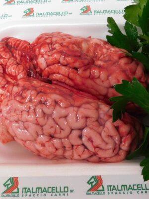 Cervello di bovino adulto